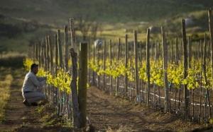 secture-ruta-vino